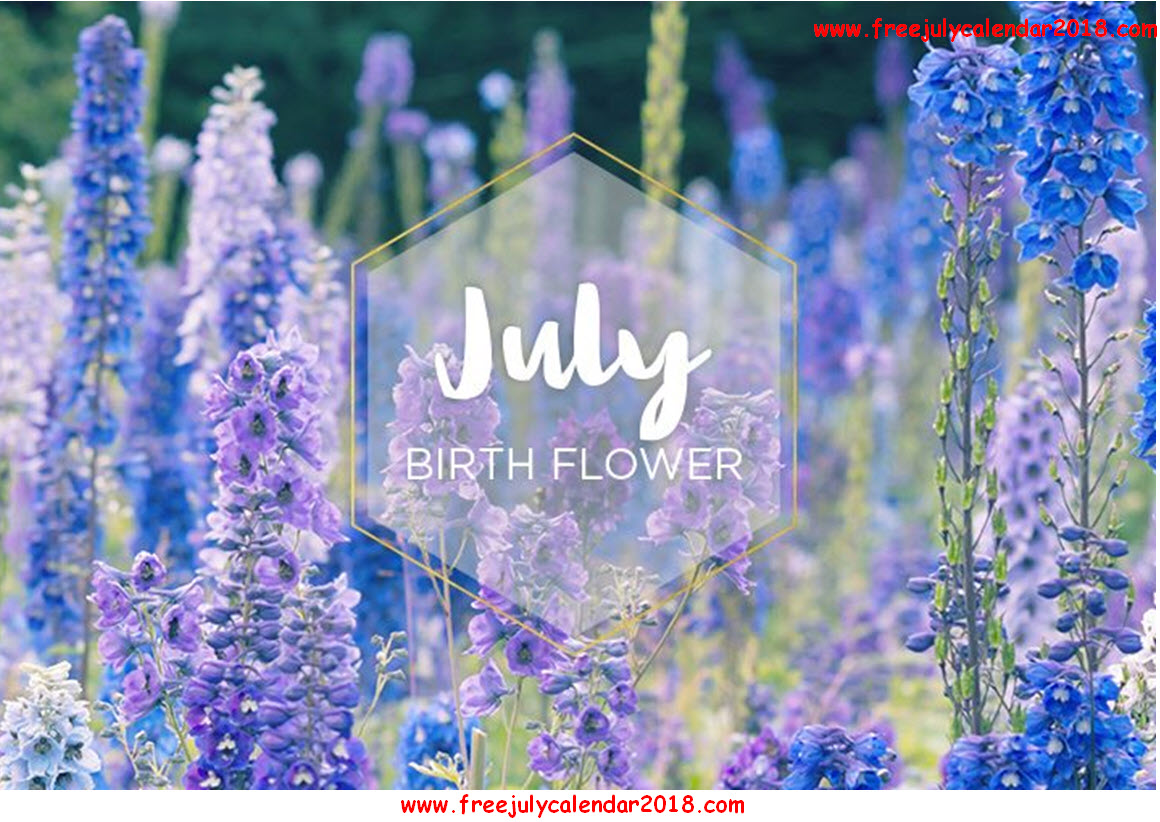 Flower For July Month