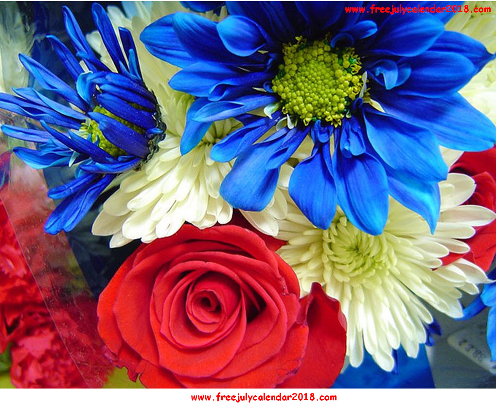 July Flowers Images