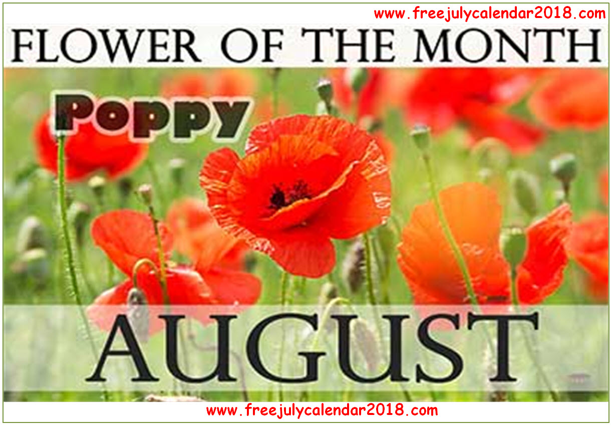 Flower For August Month